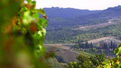Grapes in the Vineyard in Tuscany, Italy 4K Stock Video Footage - stock footage