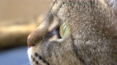 4k cat eye ball close up macro - stock footage