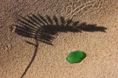 The shadow of the plant on yellow sand beach and green glass from the sea - stock photo