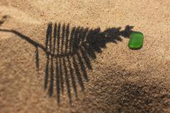The shadow of the plant on yellow sand beach with a piece of green glass - stock photo
