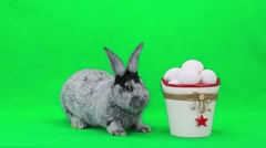 Rabbit on green screen Stock Footage