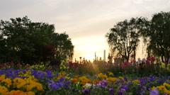 Flower garden in sunset:4K Stock Footage