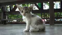 Small hungry kitten sits alone on island of Langkawi, Malaysia, cat Stock Footage