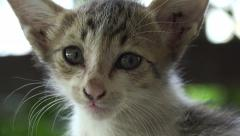Cat, small hungry kitten looks towards camera on Langkawi, Malaysia Stock Footage