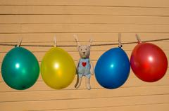 Colorfull balloons pinned on a washing line - stock photo