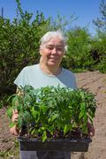 Female senior posing seedlings tomato - stock photo
