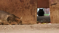 Two Homeless cats near trash dumpster Stock Footage