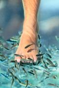 Feet pedicure fish spa - skincare treatment with the fish rufa garra - stock photo