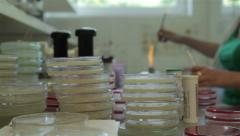 Biological analysis, technician analyzing specimens, focus from dishes to hands. - stock footage