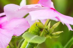 Caterpillar - stock photo