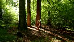 4K Forest moving towards trees, Summer Steady. Stock Footage
