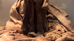 Prehistoric Mummy, South America - stock footage