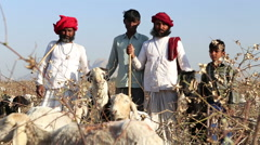 Portrait of cattle keepers at field in Jodhpur, with sheep chewing in front. Stock Footage
