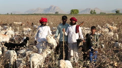 Portrait of cattle keepers at field in Jodhpur. Stock Footage