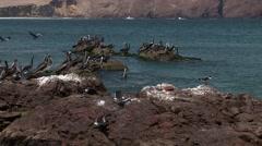Nice Bay in Peru (Paracas) Stock Footage