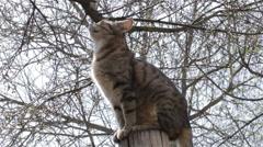Cat sitting on stump Stock Footage