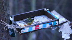Great Tit Bird (Parus major) Eating from Feeder in Winter Forest Stock Footage