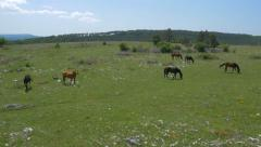 Aerial - Grazing horses of different colors Stock Footage