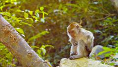 Cute Monkey Sits Contemplatively Stock Footage
