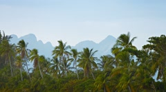 Wild Coconut Palms in a Southeast Asian Wilderness Area Stock Footage