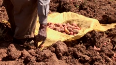 Potato harvesting familiy in the Andes of Peru Stock Footage
