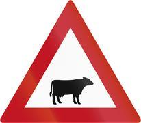 Cattle Crossing in Botswana - stock illustration