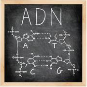 ADN - DNA in Spanish, French and Portuguese. Stock Photos