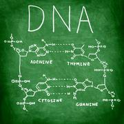 Stock Photo of DNA chemistry structure on chalkboard