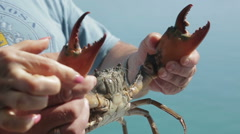 Man holding a large crab Stock Footage