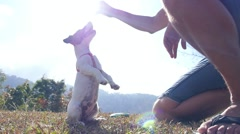 Jack Russel Terrier Playing Outdoor with Owner. Slow Motion Stock Footage