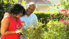African American ethnic senior male female healthcare insurance garden flowers - stock footage