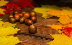 Acorns among leaves Stock Photos