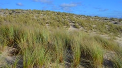 Dunes, Seaside grass with cumulus clouds and blue sky Stock Footage