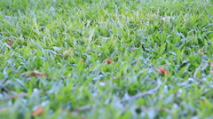 Dolly:Green Grass Field Footage Stock Footage