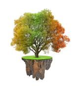 Little island and colorful autumnal tree Stock Photos