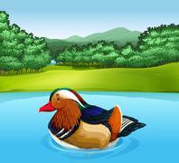 Madarin duck - stock illustration
