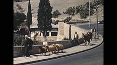 Vintage 16mm film, 1962, Jerusalem sheep and traffic Stock Footage