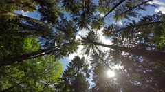 Forest roof with streaks of sunshine and plane overhead. Stock Footage
