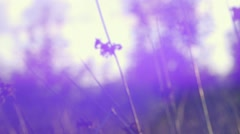Field Rushes with Lens Flare - stock footage