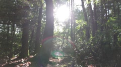 Stock Video Footage of Sun Pouring Through Trees in Woods
