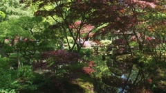 Reflection of Acer Palmatum in pond, Japanese Garden - stock footage