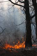 Burning forest - the natural disaster caused by an anthropogenous factor Stock Photos