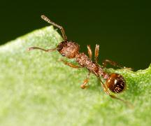 Ant on a green leaf. close Stock Photos