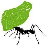 Leaf cutter ant - stock illustration