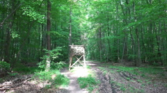 Sunny woodrush beech forest pathway with tree stand Stock Footage