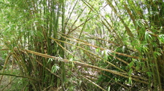 Tropical Scenes - bamboo Stock Footage