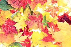 Leaves - fall leaf background texture - stock photo
