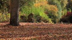 Falling Leaves in Park in Autumn - stock footage
