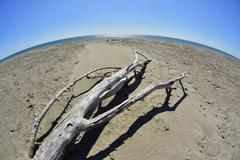 Wide Angle of Driftwood on Beach, Mediterranean Sea, Saintes-Maries-de-la-Mer, - stock photo