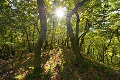 Forest with Sun, Boppard, Rhein-Hunsruck-Kreis, Rhineland-Palatinate, Germany Stock Photos
